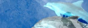 Navigate to Delfini